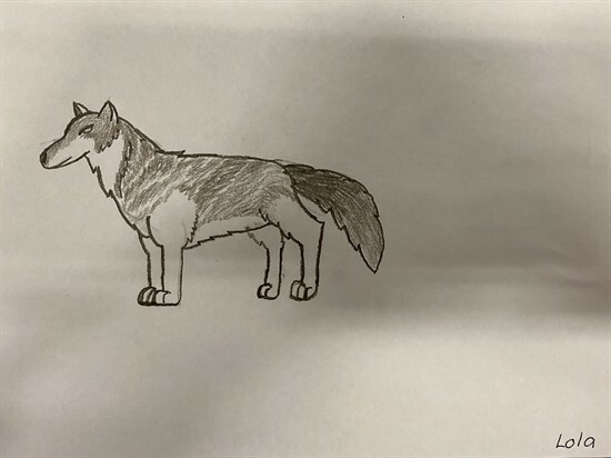 Wolf Sketches by 56GZ (2)