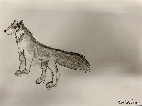Wolf Sketches by 56GZ (3)
