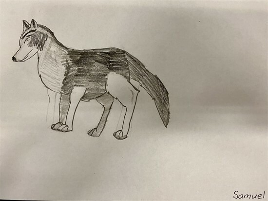 Wolf Sketches by 56GZ (4)